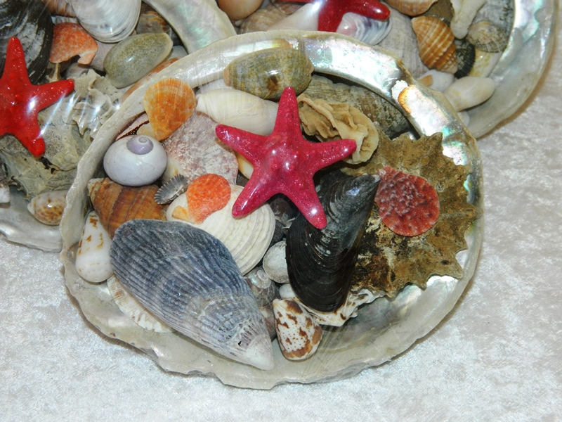 Abalone with Shells 13-14 CodeS361